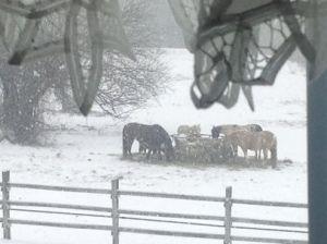 horses-in-snow